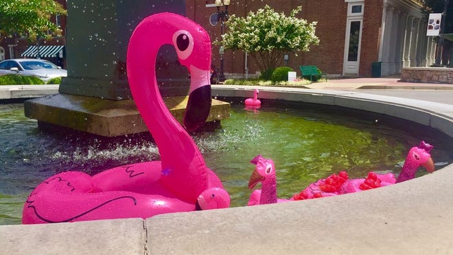 A flock of flamingos floats in the fountains on the downtown Columbia square. The flocks were placed by Center of Hope through donations to raise awareness and prevention of domestic violence and sexual abuse.