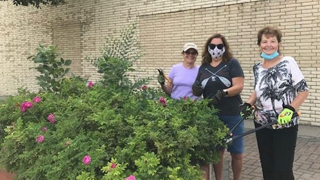 IMPRESSIVE PLANTER - Crookston Kiwanis members, left to right, Cindy Braseth, Shirley Iverson Susan Sylvester trim up the roses in their adopted planter downtown.