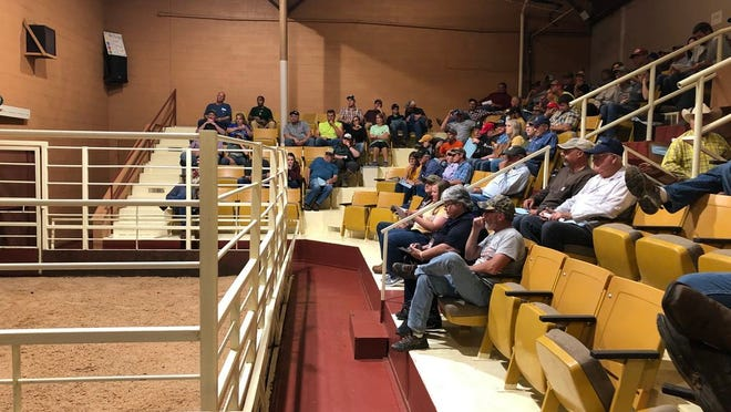 Jordan Thomas, MU Extension state beef reproduction specialist, encourages producers still seeking fall-calving heifers to attend the two remaining Show-Me-Select spring sales, scheduled for June 5 in Fruitland and June 12 in Farmington.