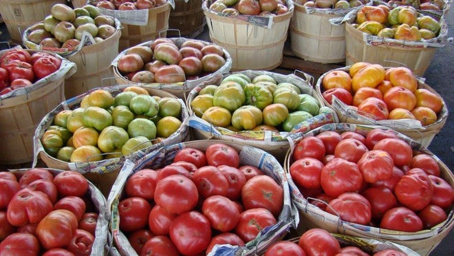 Farmers will sometimes leave tomatoes in the field, unharvested, if they've been damaged by weather or disease.