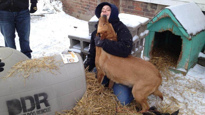 A dog thanks Detroit Dog Rescue's Kristina Rinaldi as she supplies straw for the dogs' igloo. Volunteers have stepped up efforts in recent weeks during the cold weather, canvassing the city to check on reports of endangered canines as well as distributing donated igloos, straw and food.