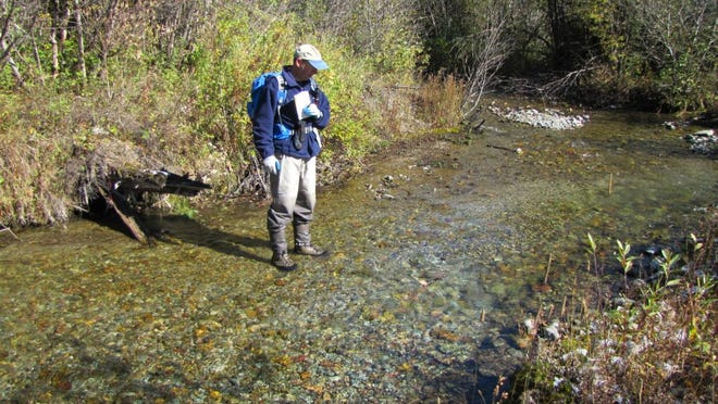 A fisheries biologist examines a bull trout redd in a channel of Ole Creek in the Glacier National Park backcountry.