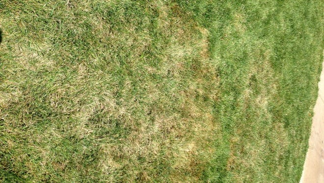 Patches of yellowing lawn.