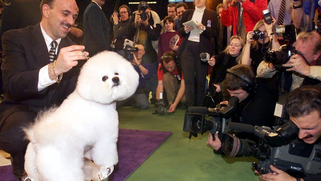 A Bichons Frises named Special Times Just Right wins Best in Show at the 125th Westminster Kennel Club Dog Show Tuesday, Feb. 13, 2001 in New York. The handler is Scott Sommer. (AP Photo/Mark Lennihan) ORG XMIT: XNYR406