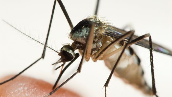 Prevent mosquito-related diseases by managing collected water sources in your yard.