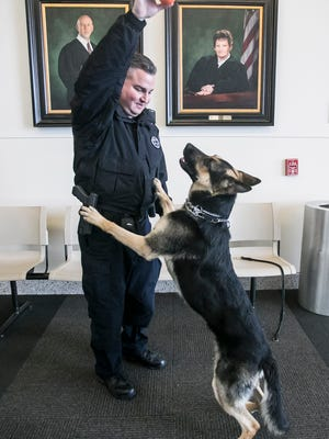 The York County Sheriff's Office K-9 Division newest member Sgt. Hawk, of the Czech Republic, jumps up to get his ball from handler Corporal Corey Strine, while playing on the 6th floor of the Judicial Center, Wednesday, March 15, 2017, in York City. Sgt. Hawk and his handler Corporal Corey Strine, will be heading to K-9 Training at Vonderhausgill Police K-9 Training Academy, in Wapakoneta, OH. All funds for Sgt. Hawk, was provided by the Hawk's Club, of Springettsbury. Amanda J. Cain photo