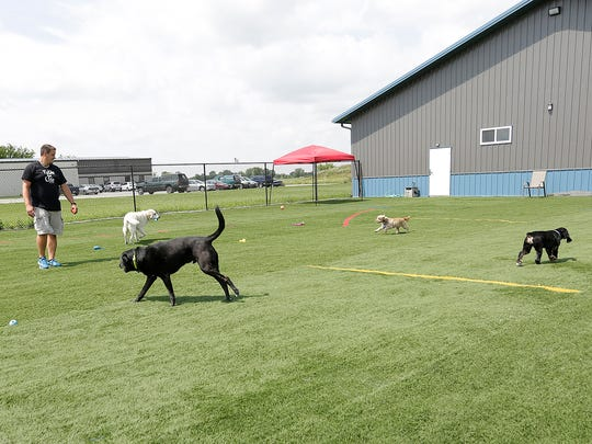Dogs romp outdoors on artificial turf at Jake Guell's