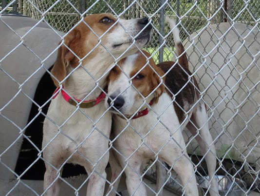 636083500122539932-0901-Dogs-Confiscated.JPG