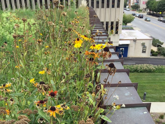 The green roof on WFYI Public Media's office at 1630 N. Meridian St.