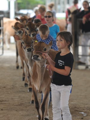 Cows were shown Saturday during the final day of the Wayne County 4-H Fair at the Wayne County Fairgrounds on Salisbury Road.