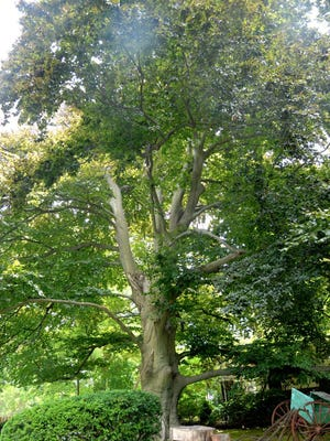 Totowa will be evaluating the health of its trees.