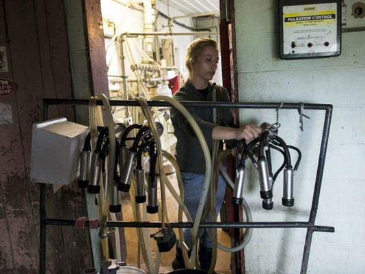 MacKenzie Keener preps the milk hoses at Chris De Will dairy farm in Swatara Township on Thursday, June 18, 2015. F Jeremy Long -- Lebanon Daily News