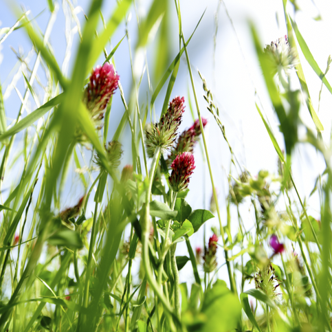 How well do you know our northwest Louisiana wildflowers?