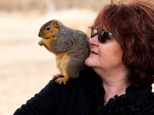 Baby, a squirrel Cindy Dye of Oakland City, Ind., rescued and raised from infancy nibbles on a snack Dye provided Wednesday morning. The squirrel has left the Dye home for its own condo in an old maple tree, but still loves attention – and snacks – from his foster mom.