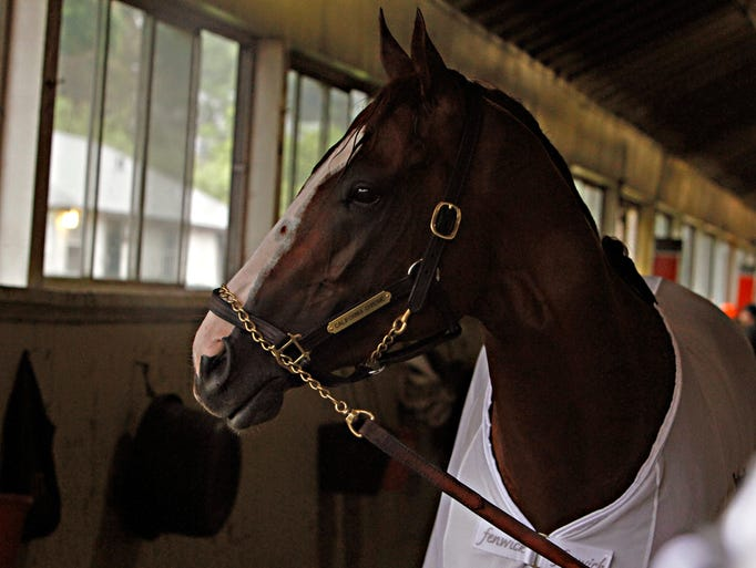 Kentucky Derby and Preakness Stakes winner California Chrome pauses in his barn while walking after his morning gallop at Belmont Park race track in Elmont, NY., Thursday, June 5, 2014.