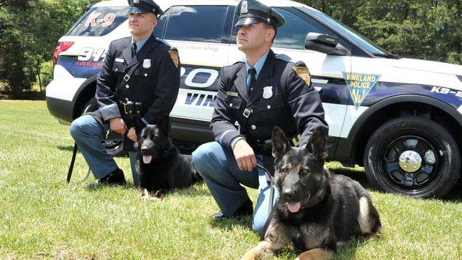 Vineland Police Officer Louis Platania and his new dog Agir (right), and fellow K9 officer Adam Shaw and his new dog Pikke pose for pictures at South Vineland Park recently.