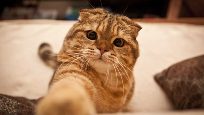A recent study out of Indiana University finds that watching cat videos can result in reduced anxiety and increased energy