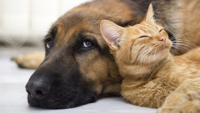 Clark County Humane Society is accepting submissions for annual Pet Photo Contest.