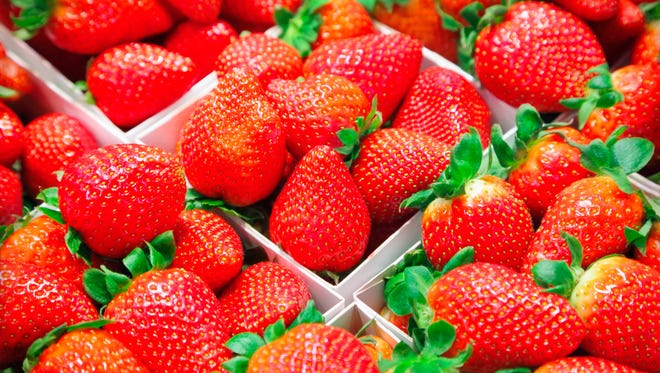 Strawberries do not continue to ripen after they are picked, so make sure you harvest those that are completely red from tip to top. The way to pick them from the plant is to pinch the stem anywhere from 1/4 to 1/2 inch from the berry.