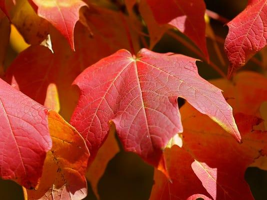 APC LEAD Fall Color0053 100714wag.jpg
