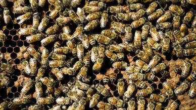 A swarm of bees killed a man in Yavapai County on July 11, 2017, according to sheriff's officials.