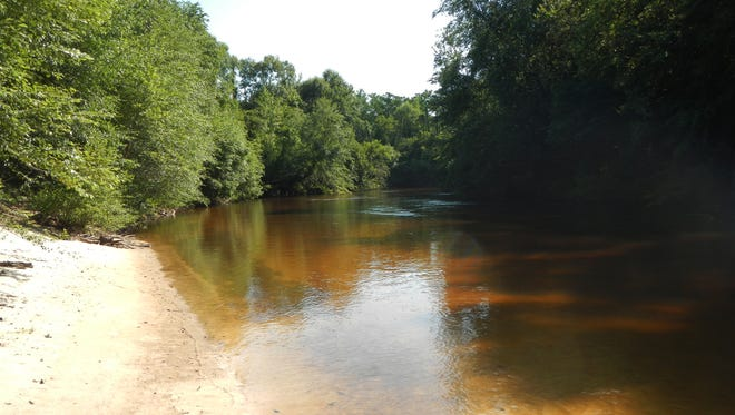 Mississippi creeks and rivers offer thousands of miles of fly fishing opportunity.