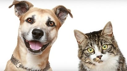 The Humane Society of Lincoln County is raising funds for a new shelter.