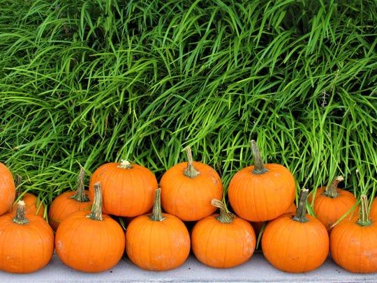 Fall means pumpkins and more pumpkins!