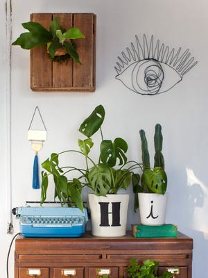 Hang your fern on an area of your wall where it gets plenty of light, usually near a south-facing window, and where you can easily reach it to take it down to water it. Staghorns thrive in humid environments. Run it under warm water in the shower for 10 to 20 minutes every other week, with some light misting in between to mimic tropical weather patterns. Do not detach it from the board. MUST CREDIT: Washington Post photo by Amy King.