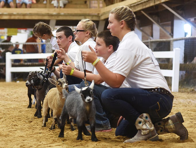 Pygmy goats and their handlers wait to be judged during
