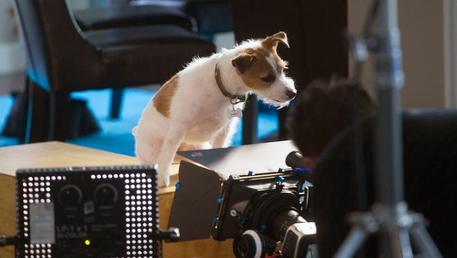 """Sammi, a Jack Russell terrier who stars in Joe Clarke's upcoming film, """"Up on the Wooftop,"""" shoots a scene in Iowa City on Tuesday."""