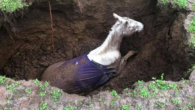 Maury County emergency responders work to rescue 15-year-old horse Misty from a sinkhole on Tuesday, Feb. 11, 2020.