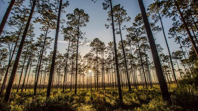 A letter writer is torn about mining plans near the Okefenokee National Wildlife Refuge.