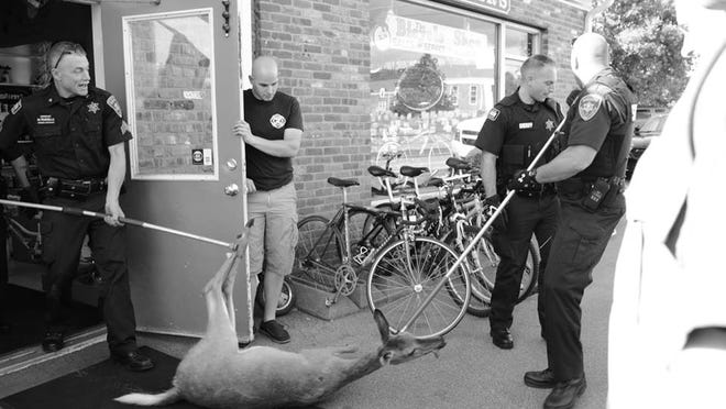 Authorities remove a deer from the pv Bicycle Shop on Saturday afternoon. The deer followed a teenage employee into the store and ran around for awhile before it was brought out.