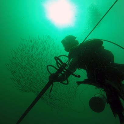 Bill D'Antuono, founder of the Naples Spearfishing