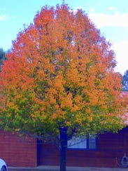 A mixed palette of nature's colors decorates a tree