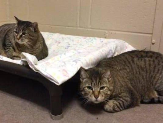 052116-f-petcats-bd-40p.jpg