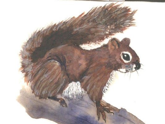 636687182343925435-red-squirrell.jpg