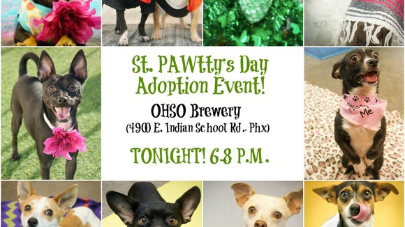 Head down to OHSO Brewery and adopt a Chihuahua from