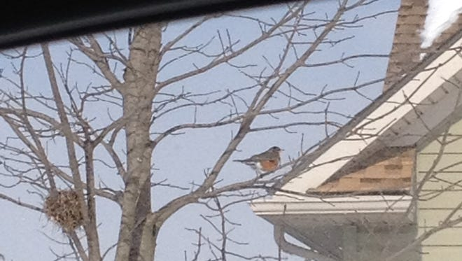 Reader John Von Blauch of Margin Road in South Lebanon Township snapped this photo of an American robin on Feb. 13 on a house in Norfolk Lane in South Lebanon Township. He said that this is the earliest he has seen robins in Lebanon County. The Cornell Lab of Ornithology said not all American robins migrate. Many remain in the same place year-round. Over the past 10 years, robins have been reported in January in every U.S. state, except Hawaii.