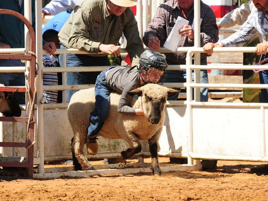 A youth participates in the mutton bustin' event in Arcadia.