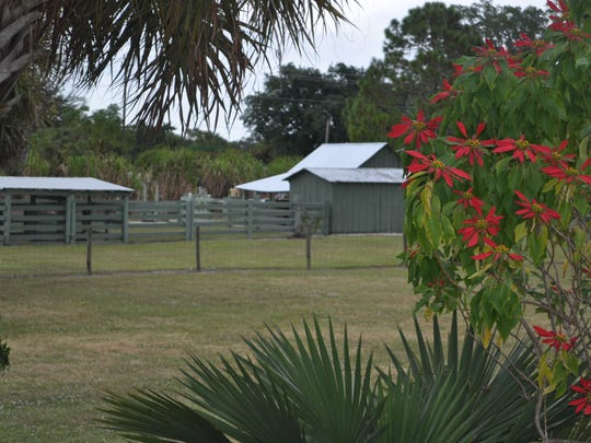 Fifteen acres of old Florida are preserved at Roberts Ranch.