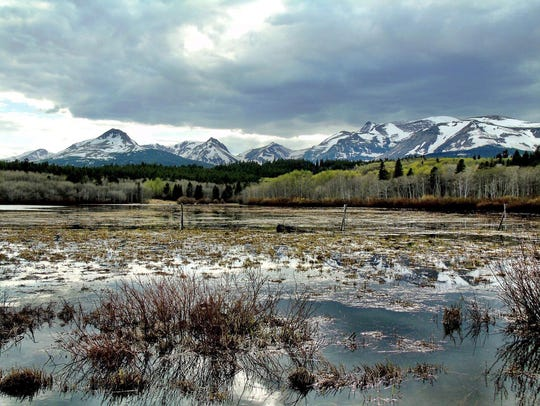 Wetlands in East Glacier are home to wildlife. Is Bigfoot among the woodland creatures?