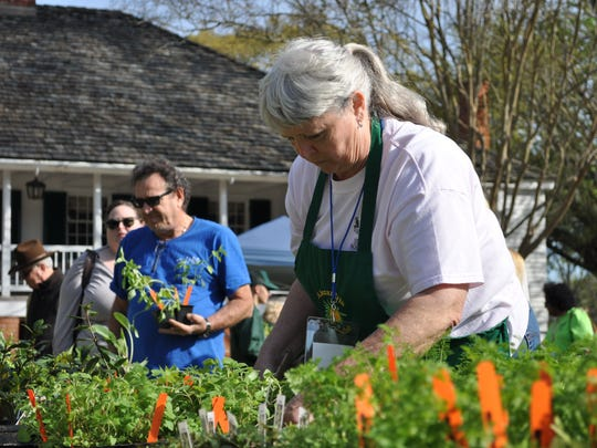 Sherrell Bozeman from the Cenla Herb Society was one of the experts on hand at the Kent Plantation House's annual Herb Day. Bozeman talked customers and explained how to plant, grow and harvest herbs, as well as how to use them. The Saturday morning sale had more than 3,000 herbs and plants, and within one hour, tables already looked sparse.
