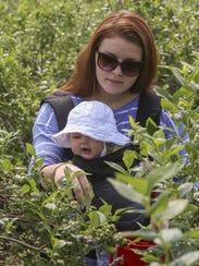 Amanda Nacion picks berries last year with Cassidy