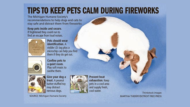 Tips to keep pets calm during fireworks