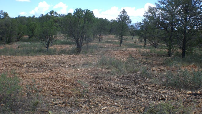 Forest land pre-treatment.