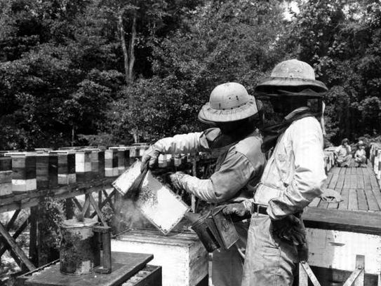 Beekeepers at work in the 1960s.