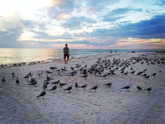 Sarasota's beaches are renowned as some the most famous