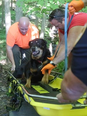 Croton Falls firefighters and North Salem police rescue a Rottweiler  named Czesky after he fell down a hill behind a home on Hawley Road.